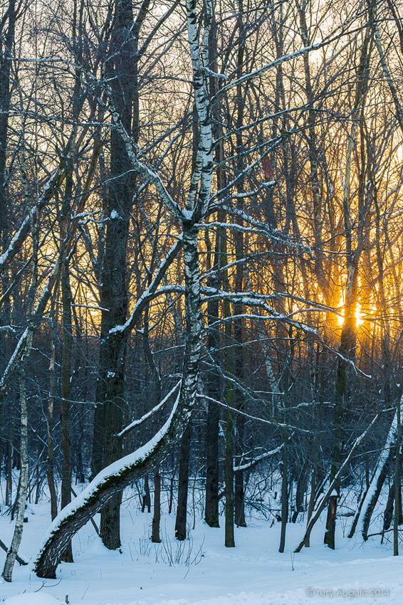 Зимнее утро. -25С