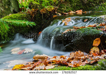 stock-photo-brook-in-autumn-with-fallen-leaves-brook-bank-overgrown-with-moss-178282517