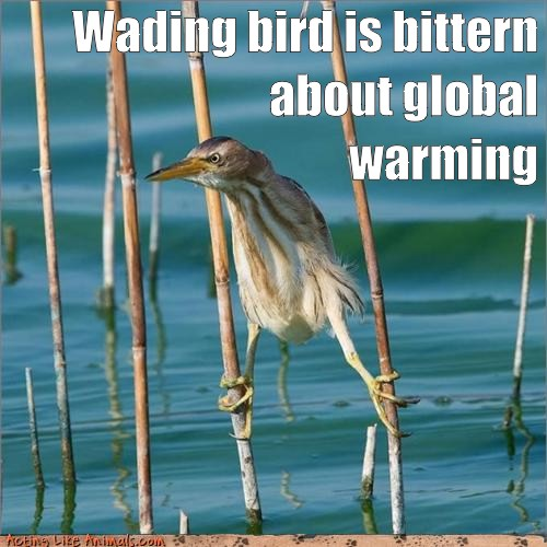 Wading bird is bittern about global warming