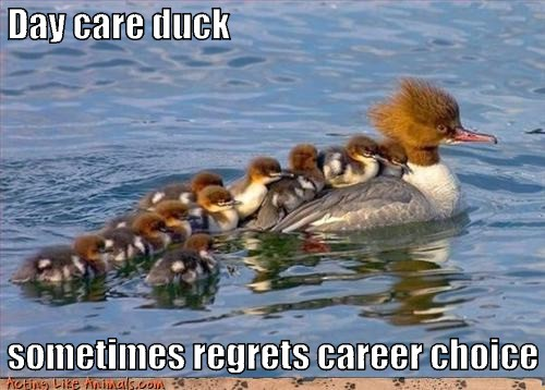 Day care duck sometimes regrets career choice