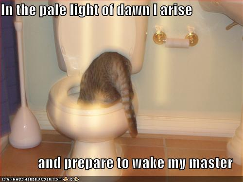 In the pale light of dawn I arise and prepare to wake my master
