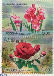 Цветы фото и их марки