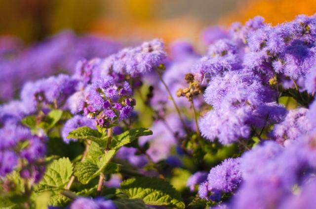 Цветы- какая прелесть