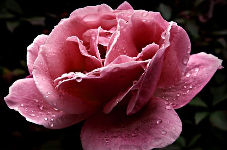 цветок41