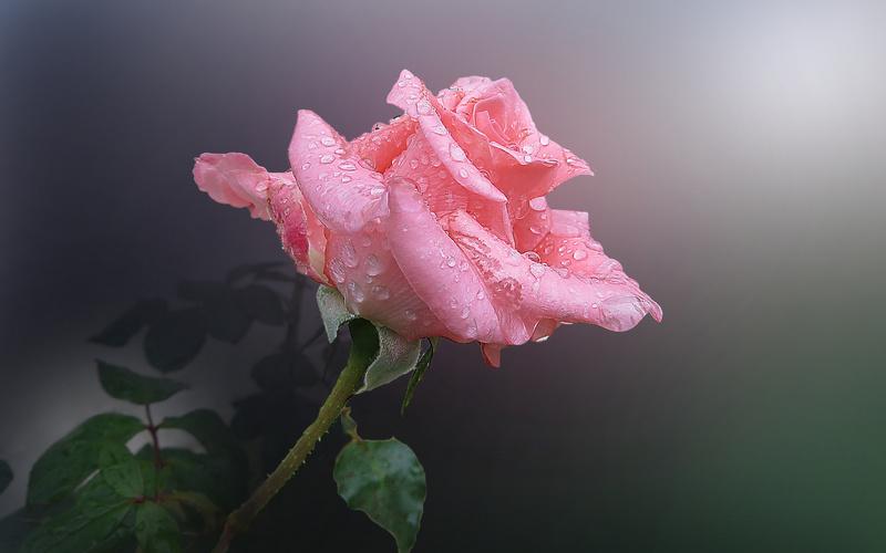 цветок44