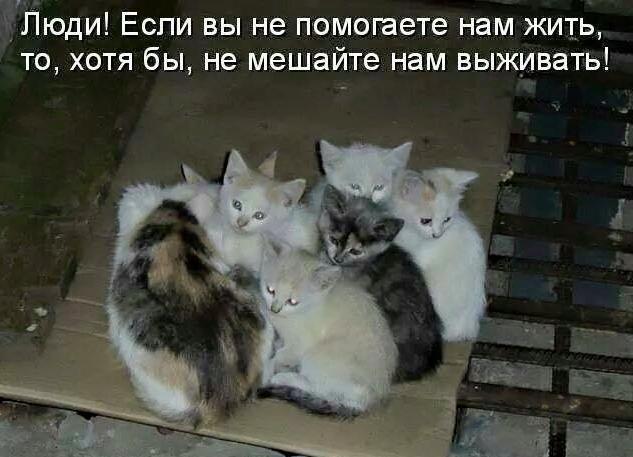 живод5