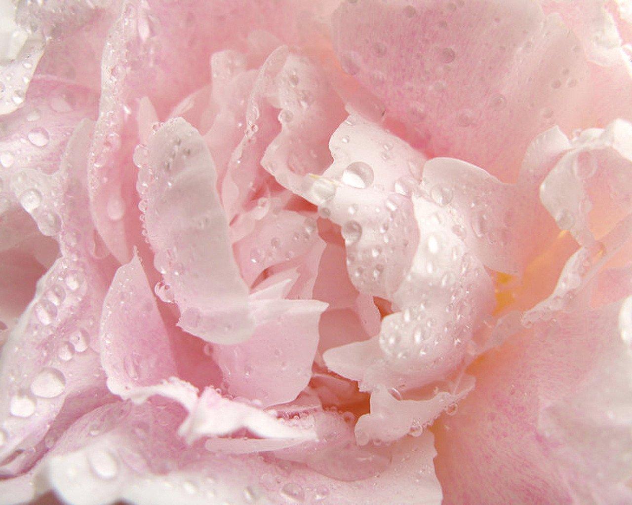 цветок35