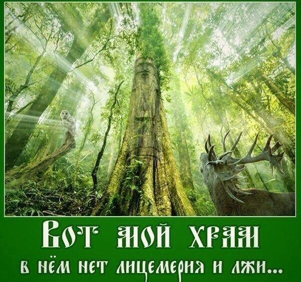 природа15