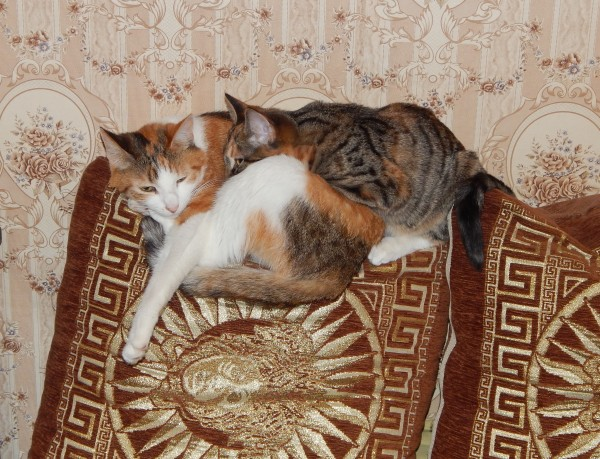 мои_кошки.jpg