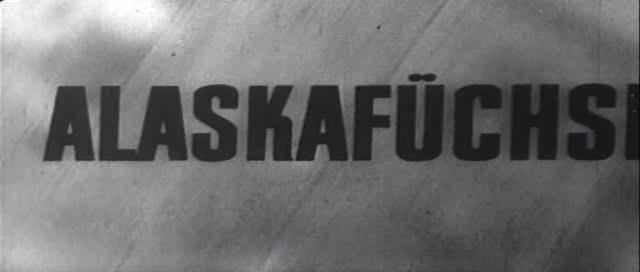 Lisy.Alyaski.(VHSRip.DivX.Rus).by.vova68.Fenixclub.avi_snapshot_00.02.08_[2016.01.08_16.09.13]