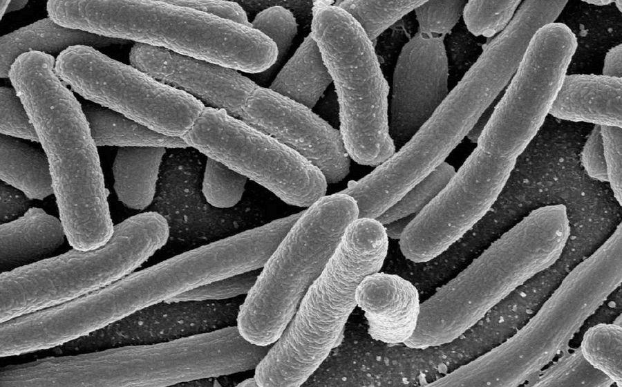 Бактерии привыкли к спирту