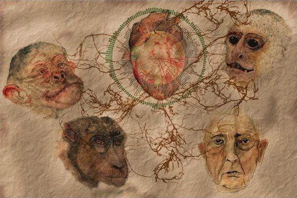 Раскрыт секрет эволюции человека