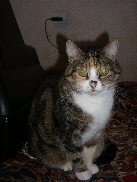 Кошка Дуся ищет любящих хозяев