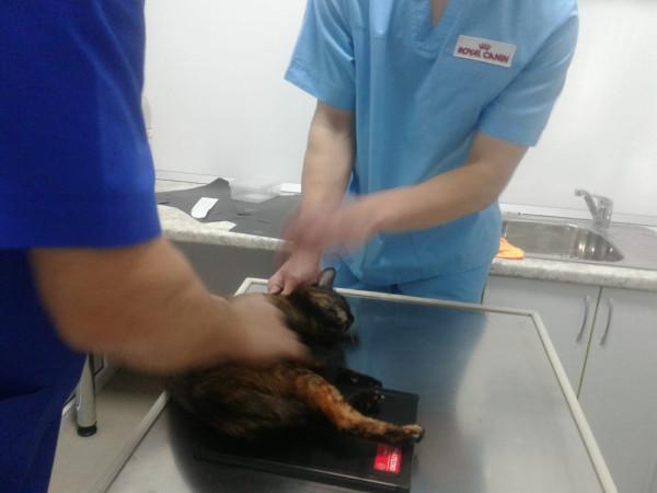 Ветеринарный центр номер 1, Батайск. Профессиональная помощь, без боли и