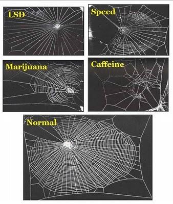 spiders-on-drugs
