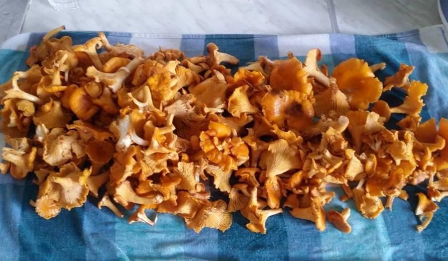 грибы1