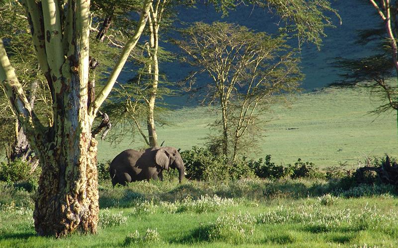 парки_слон