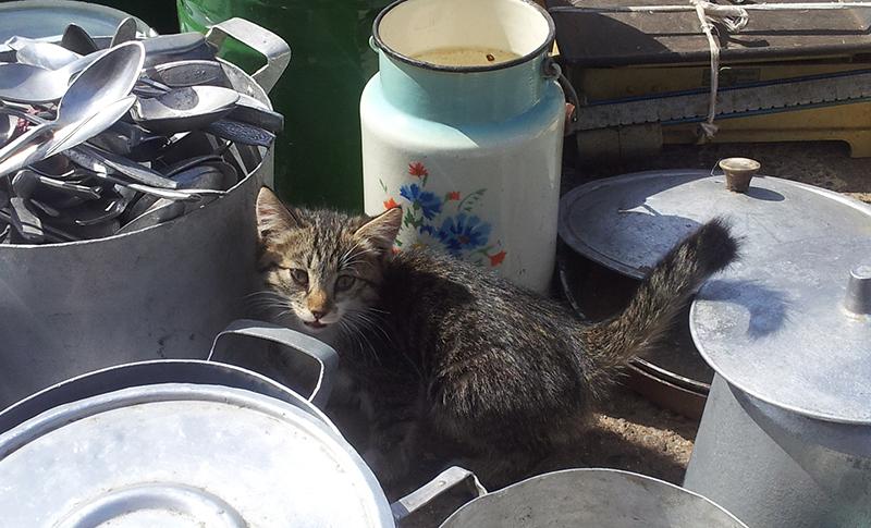 рынок_кот