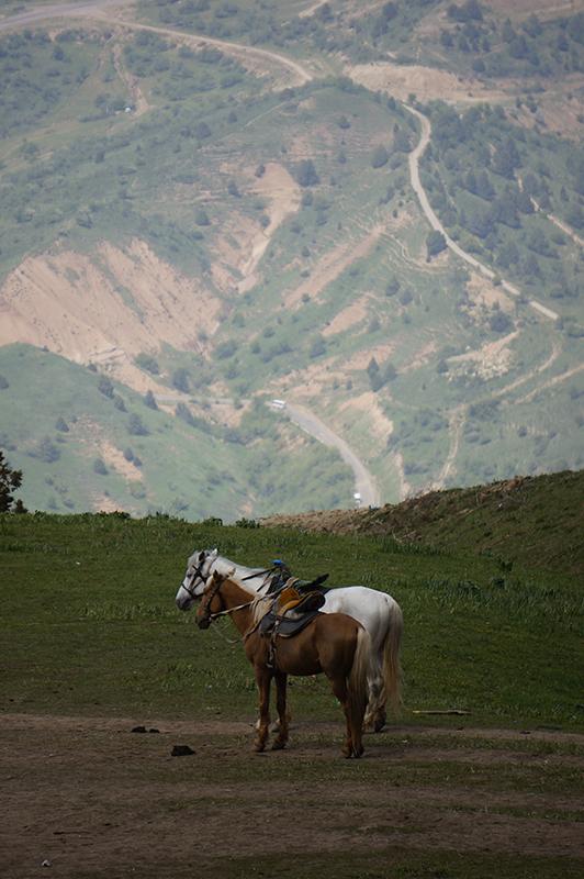 лошад2
