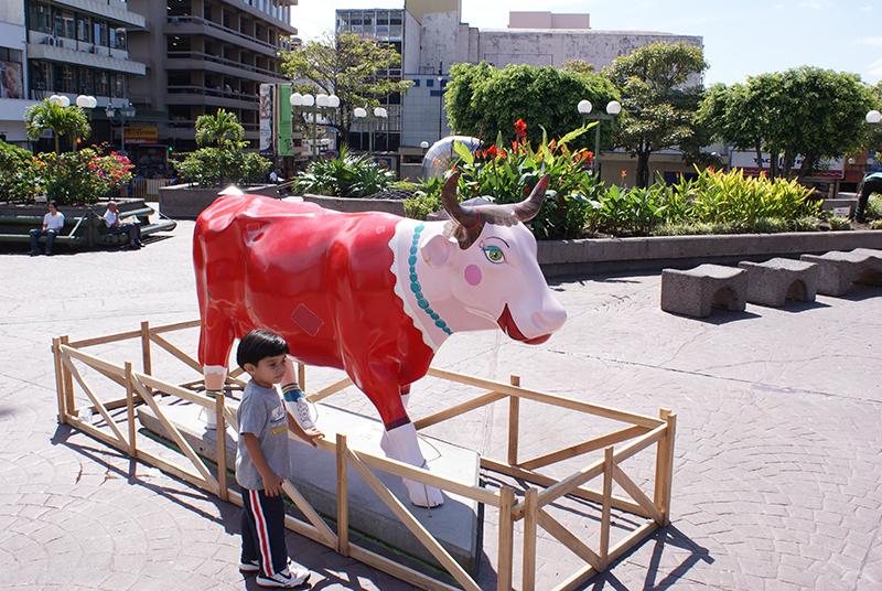 корова1