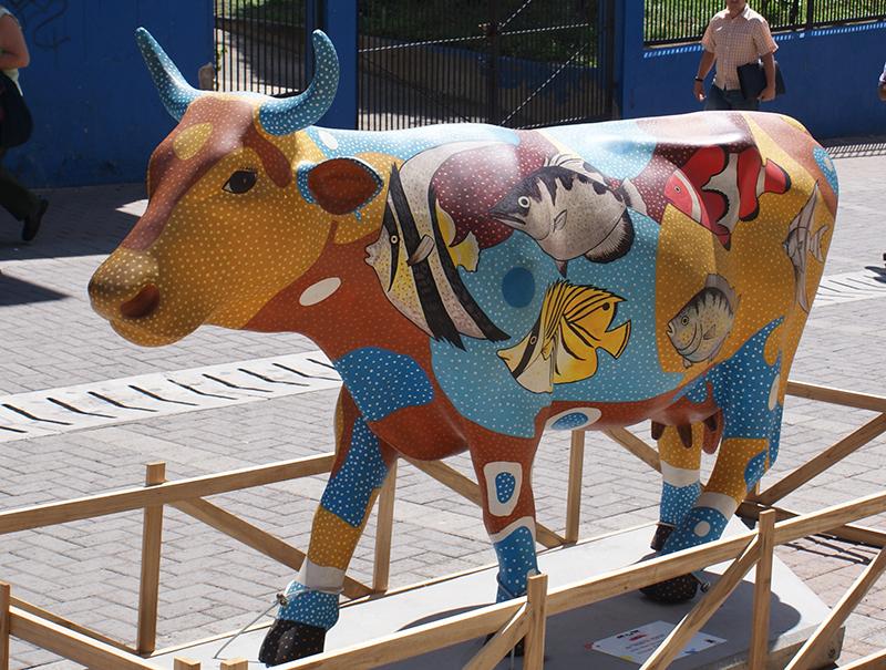 корова8