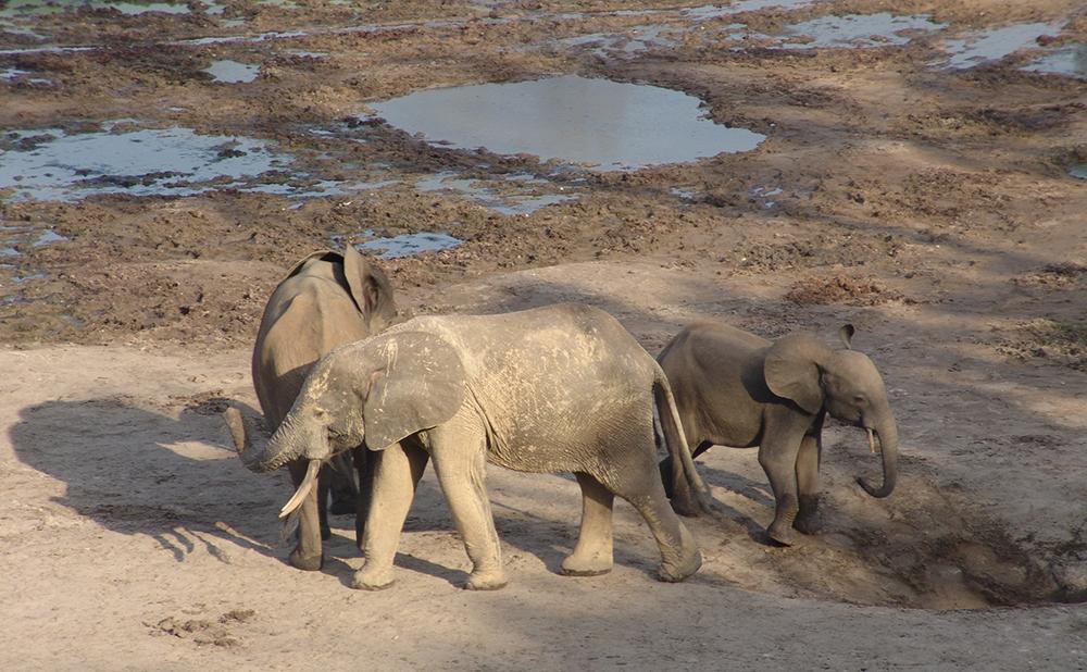 слон7