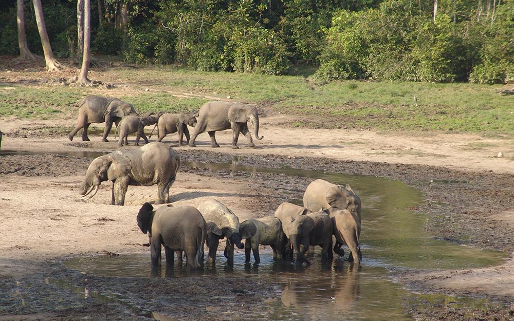 слон9