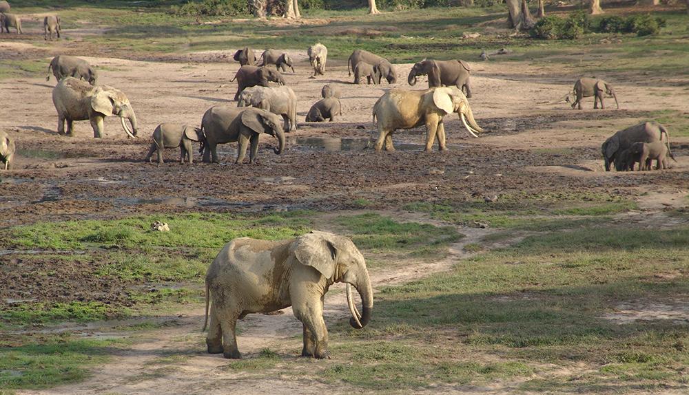 слон10
