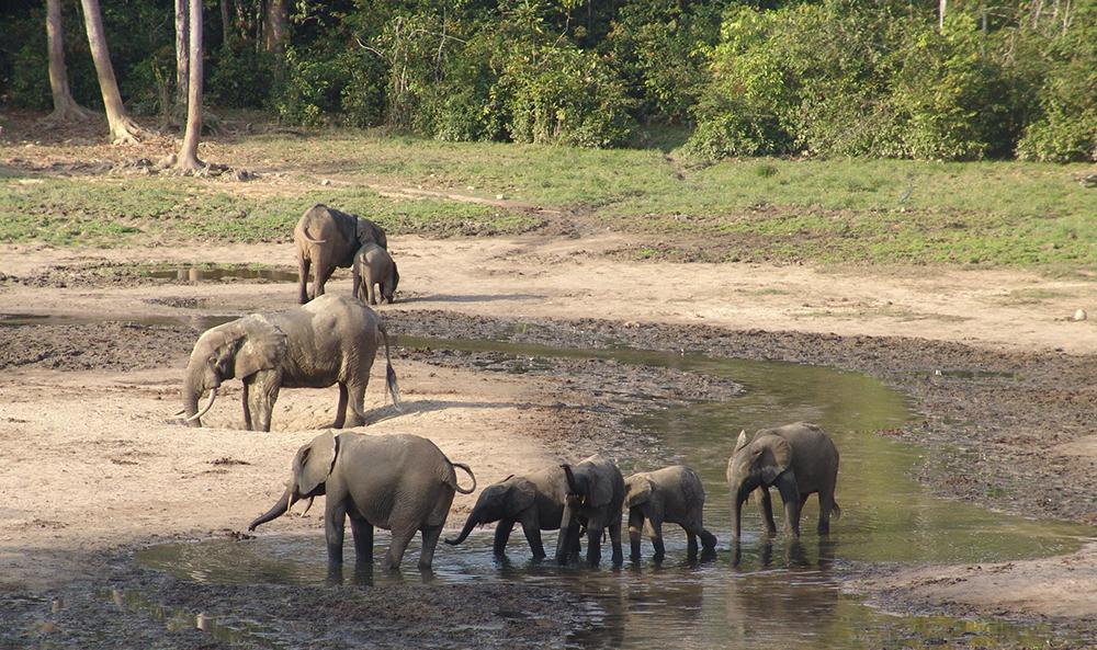 слон12