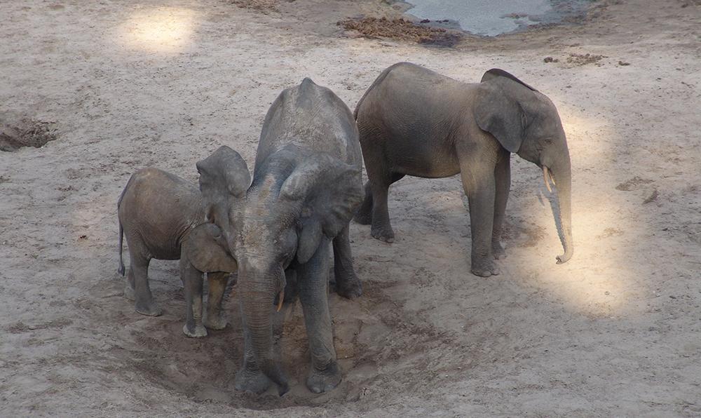 слон13