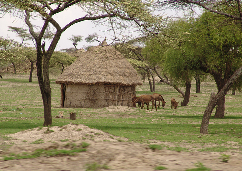 дом&ослик