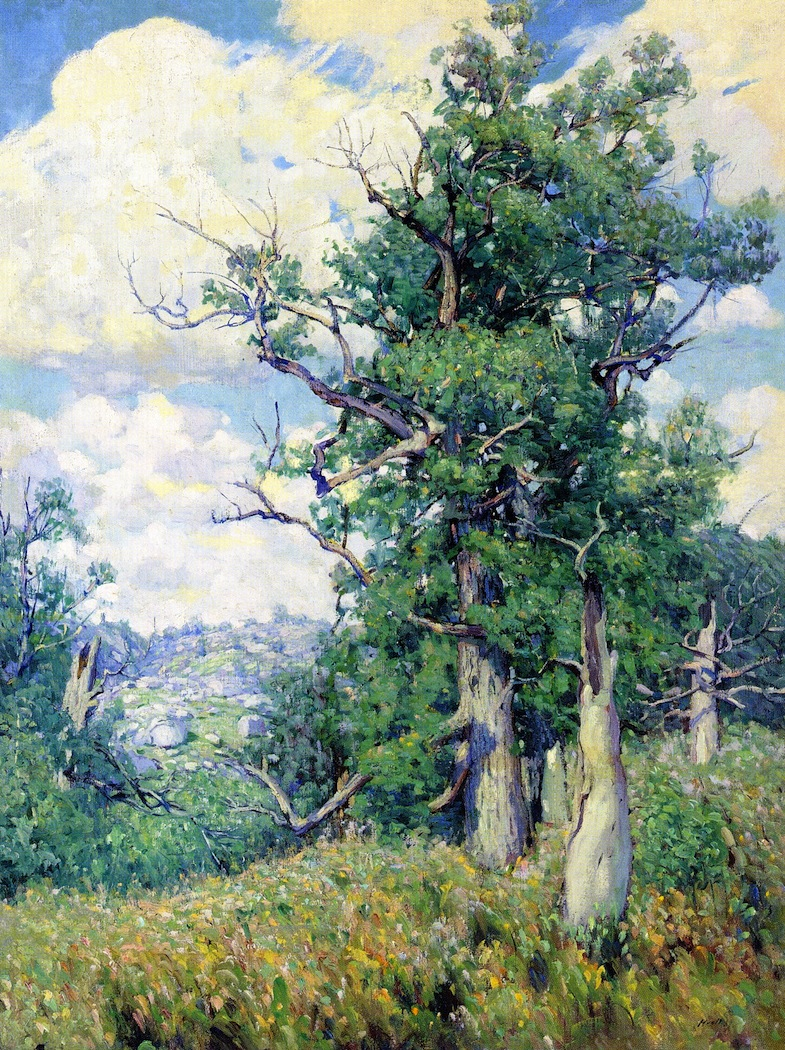 Tree at Fountainbleau