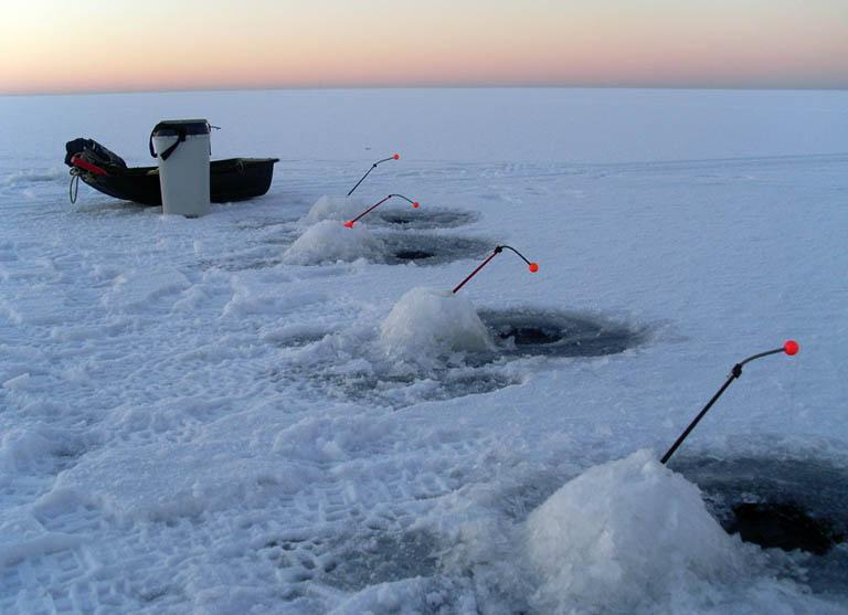 когда ловить миногу в финском заливе