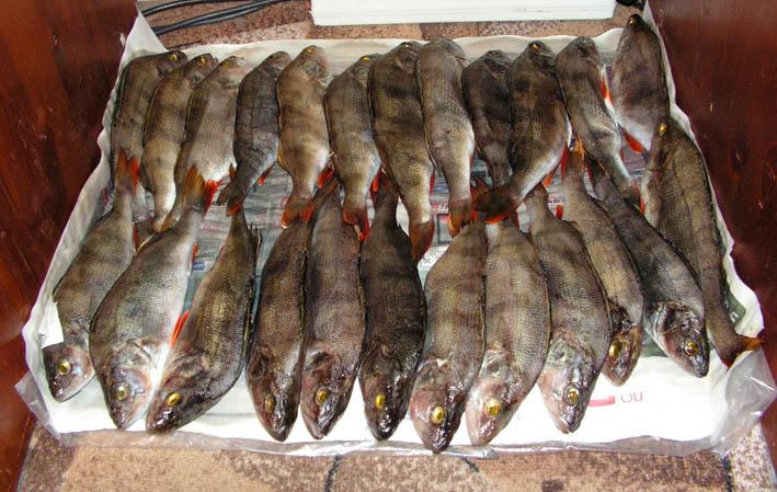 Fish_05