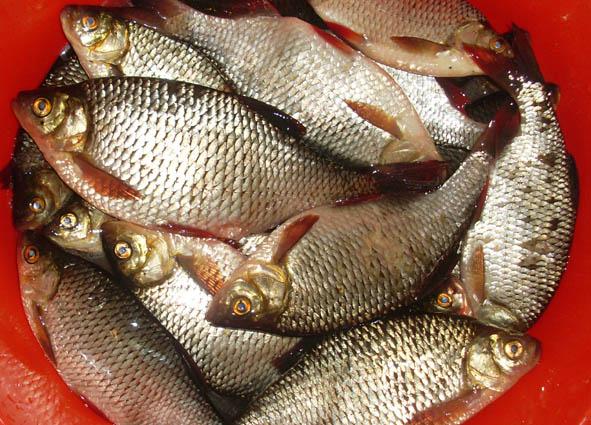 клев рыбы выборг залив