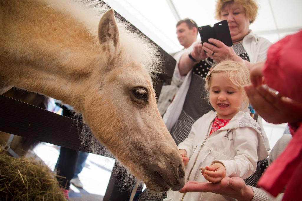 """На Агроруси, что сейчас проходит в Ленэкспо среди прочего есть и павильон с животными. Животных привезли из павловского конного клуба """"Александровская дача"""""""