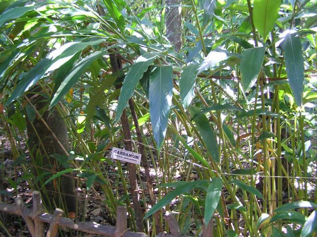 Растение Вырасти дерево Гайллардия zk-028