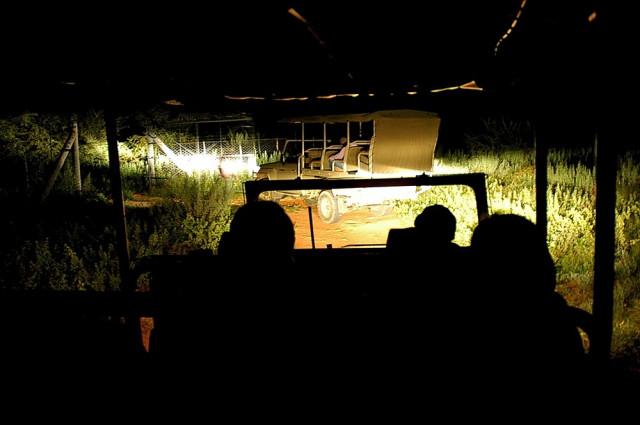 Ночное сафари в гейме Оконджима в Намибии