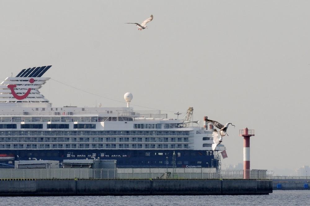 Чайки на фоне круизных лайнеров