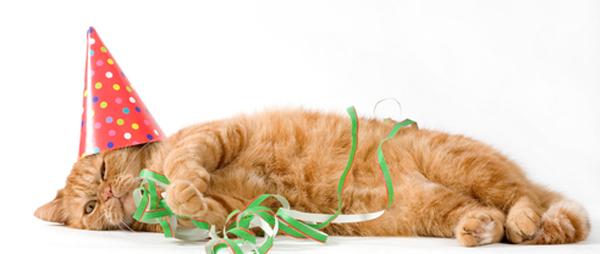 cat-birthday-pssst_0