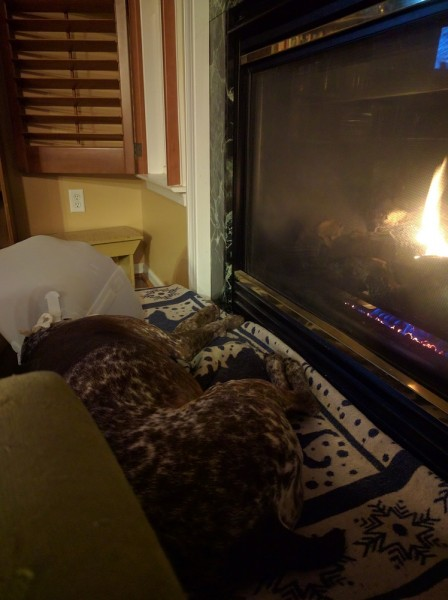 Hearth Dog