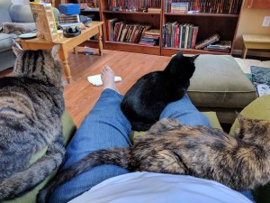 Three cats in a lap! (No one's really happy about it. :P)
