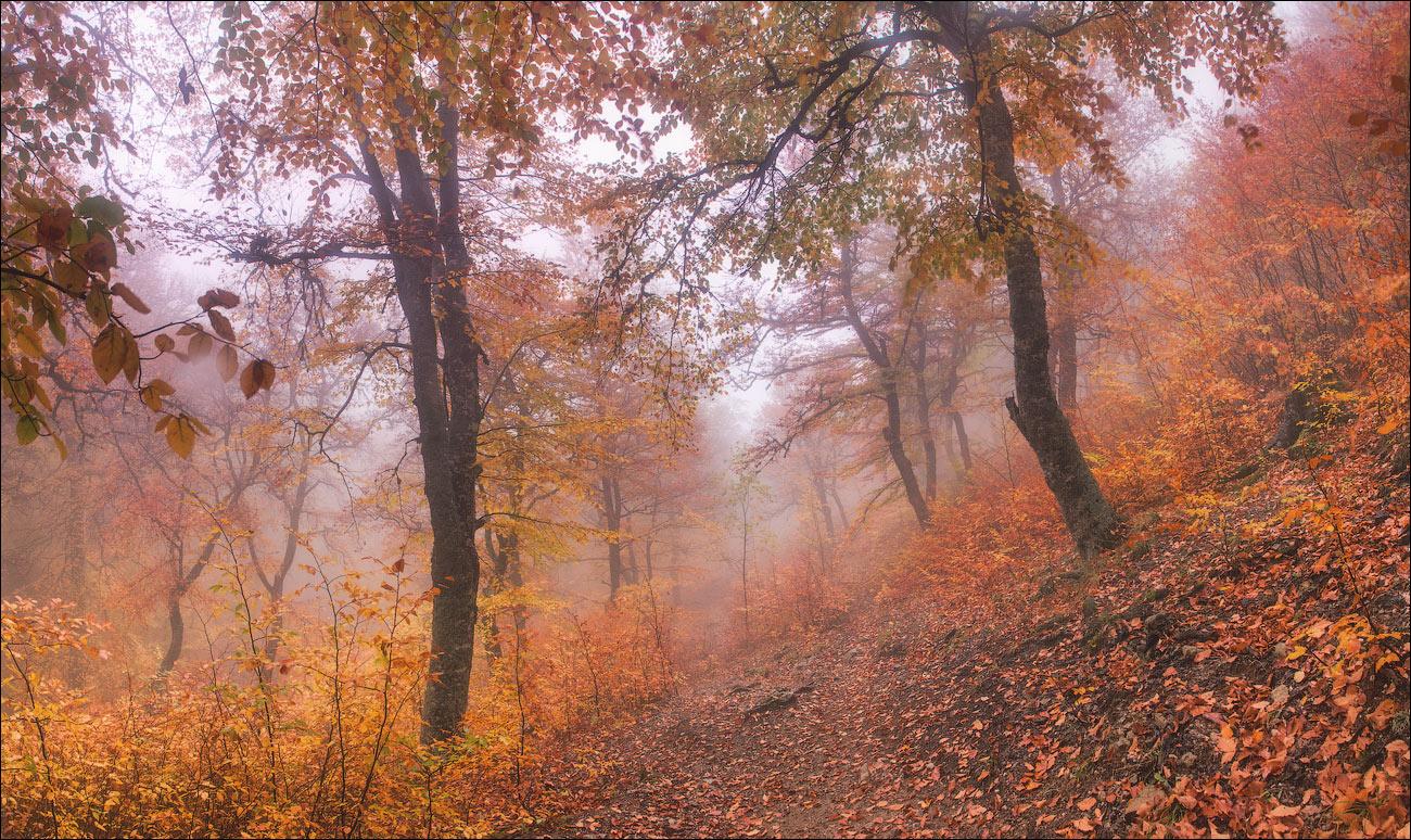 Лес1-new-with-fog-ЖЖ