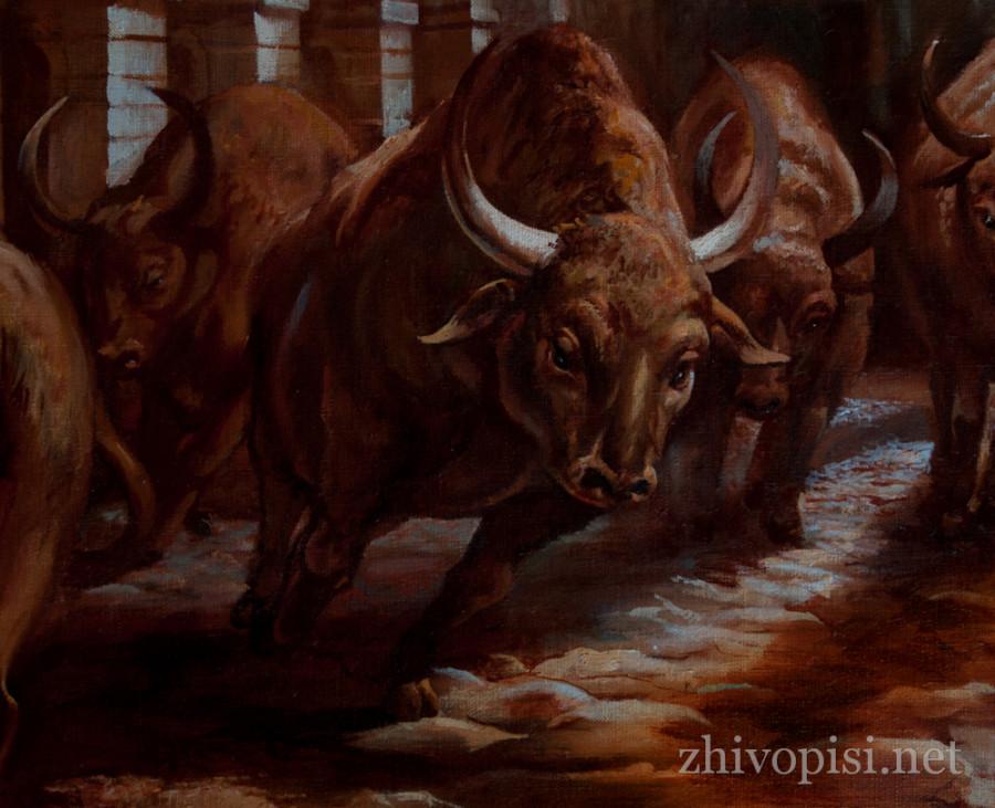 быки-собр-3