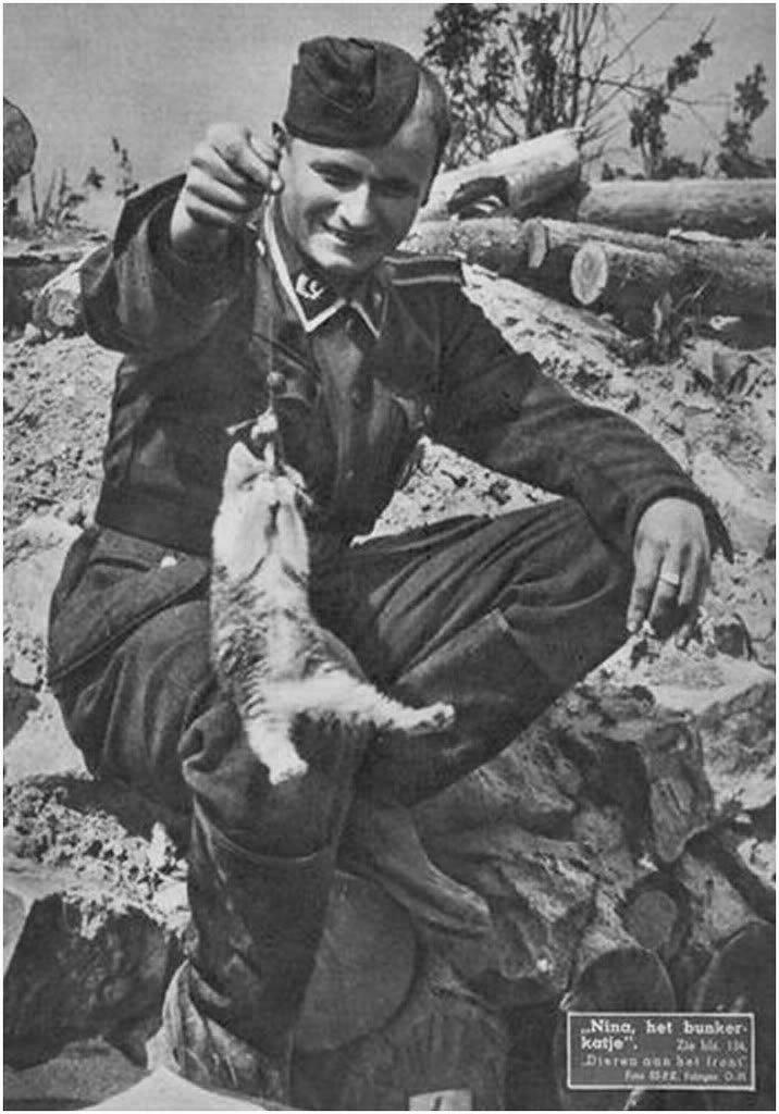 Кошки на войне фото