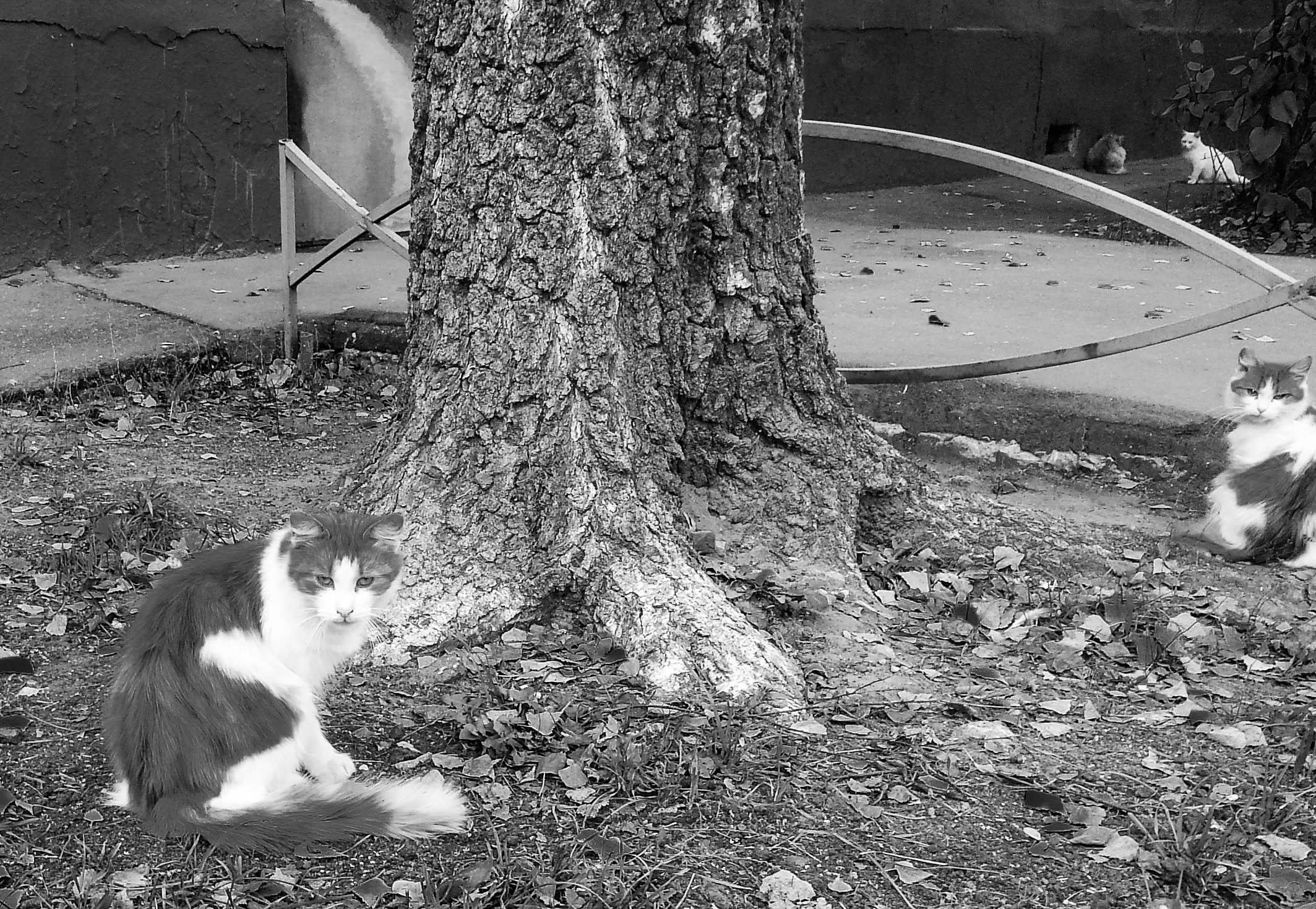 кот железн-2