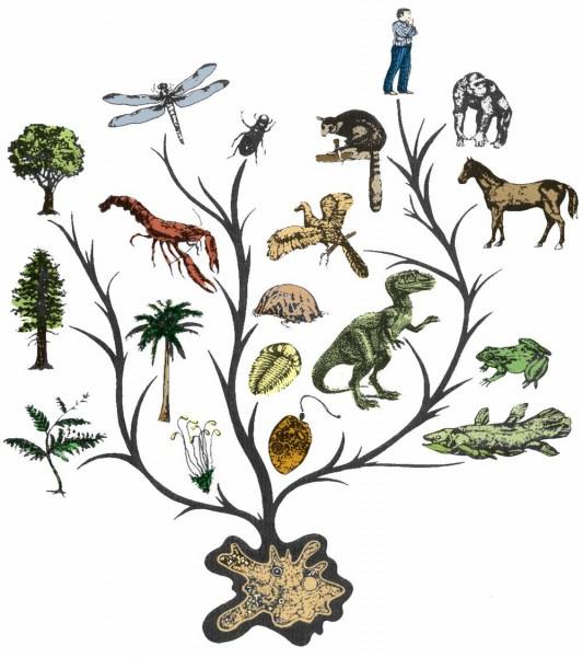 evolution-tree