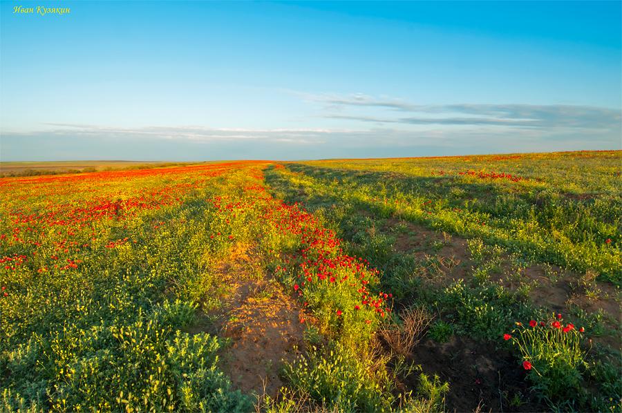 фото волжские степи цветом сад накрылся
