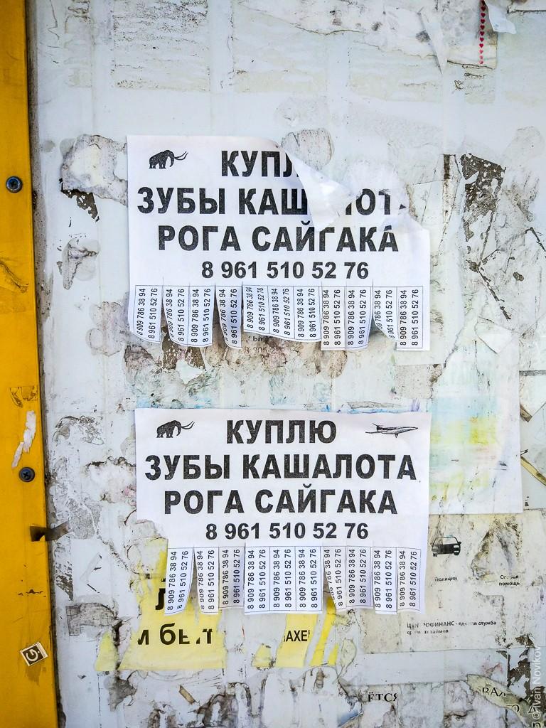 2018_06_Baltiysk_00222.jpg