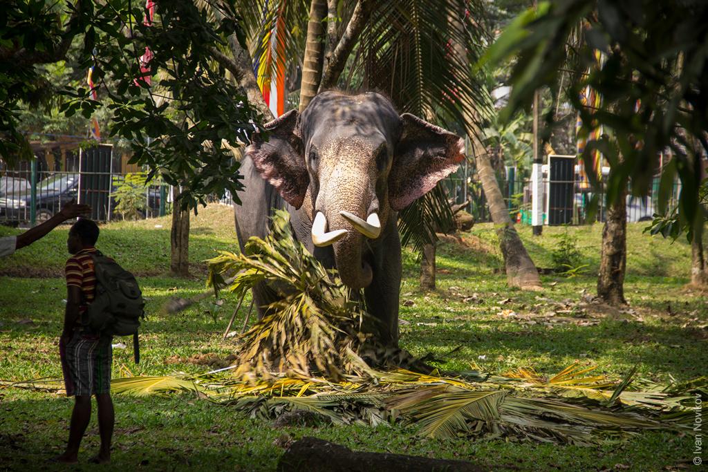 2016_02_Sri_Lanka-53.jpg